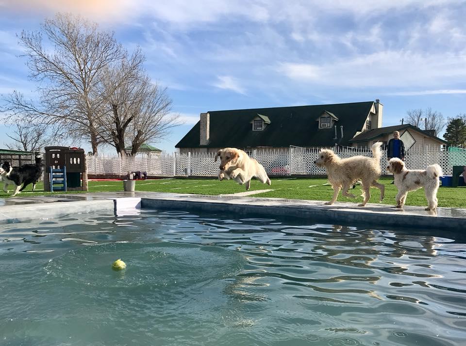 Woodland Park Dog Boarding